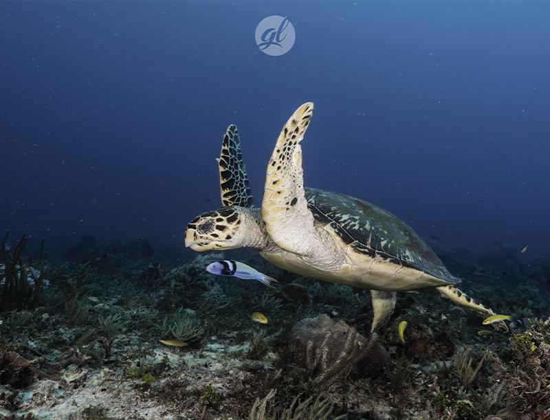 un-dive-tortue-johndiving.com
