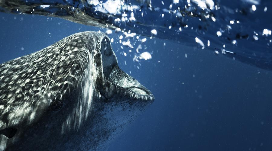 requins baleines trip
